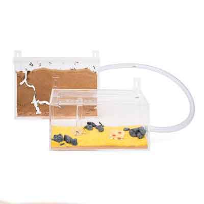 Sand Ant Farm Wall Kit